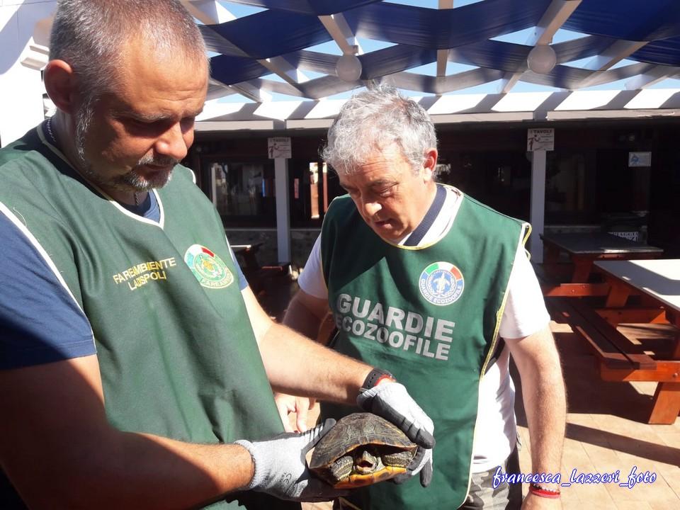 +++aggiornamento: Fare Ambiente Ladispoli recupera la tartaruga alla Spiaggia Renzi